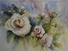 Aquarel rozen te koop