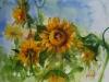 aquarel Zonnebloemen te koop