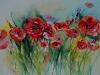 Aquarel poppies (VERKOCHT)