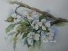 Aquarel witte-bloesem (VERKOCHT)