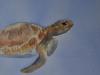 zwemmende-schildpad-Sofie-10jaar