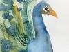 Cursiste-aquarel-Pauw