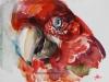 papegaai aquarel - jokeklootwijk maat 15x20 cm