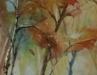Aquarel berkenboom (VERKOCHT)