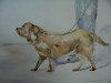 Aquarel in opdracht Hond Bas