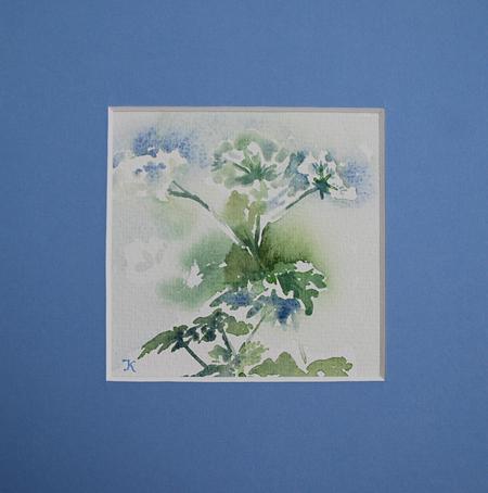 aquarel-fluitekruid te koop met p.p.