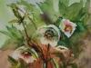 Aquarel Helleborus met Libelle, maat 36 x 28 cm te koop