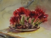 aquarel Amaryllis bollen te koop
