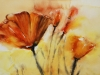 calif.poppies aquarel