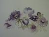 Aquarel Anemonen te koop incl. p.p. en lijst