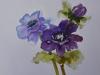 Cursist-Anemonen-aquarel