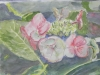 Aquarel bloemen-juul