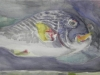 Aquarel vissen-juul