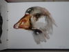 aquarel eend schetsboek-jokeklootwijk