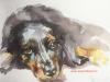 aquarel liggend zwart hondje