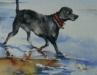 Aquarel Hond aan zee (VERKOCHT)