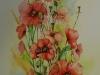 Aquarel opdracht-klaprozen maat 93 x 39 cm